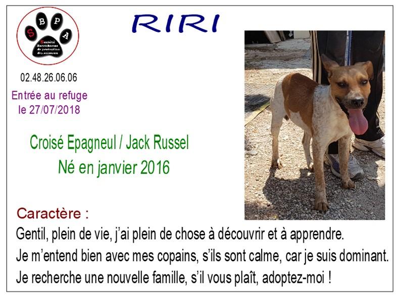 RIRI - x epagneul 2 ans - SBPA à Marmagne (18) Riri